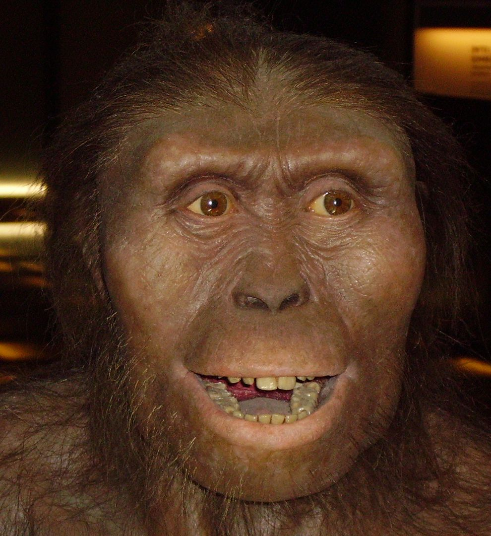 lucy discovered in africa national geographic society