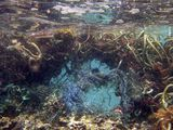 Great Pacific Garbage Patch  | National Geographic Society