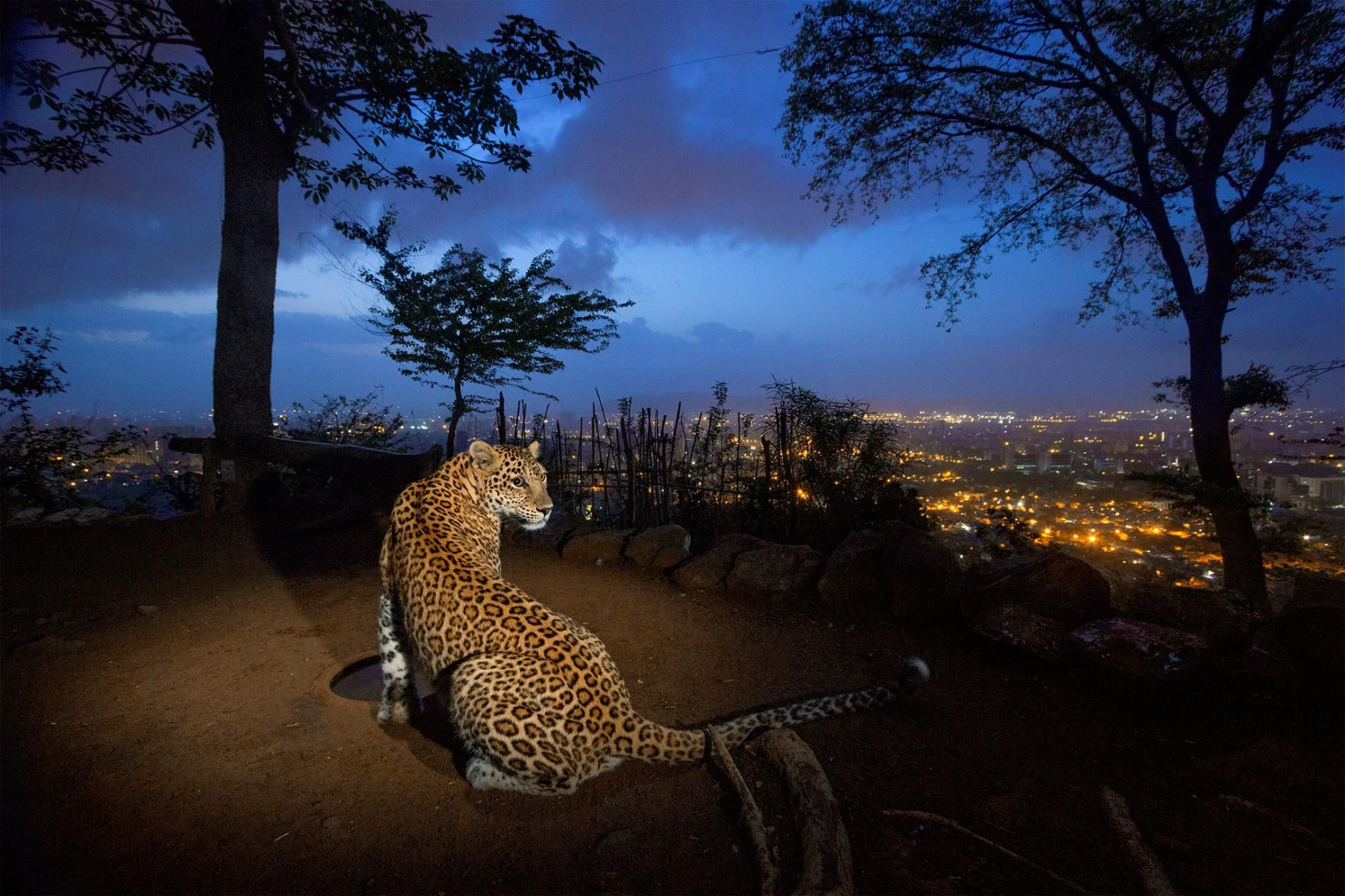 People and Wildlife in India