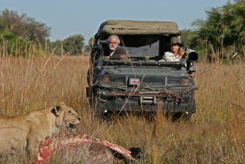 Picture of Jouberts watching lions eat an African buffalo carcass in Duba Plains