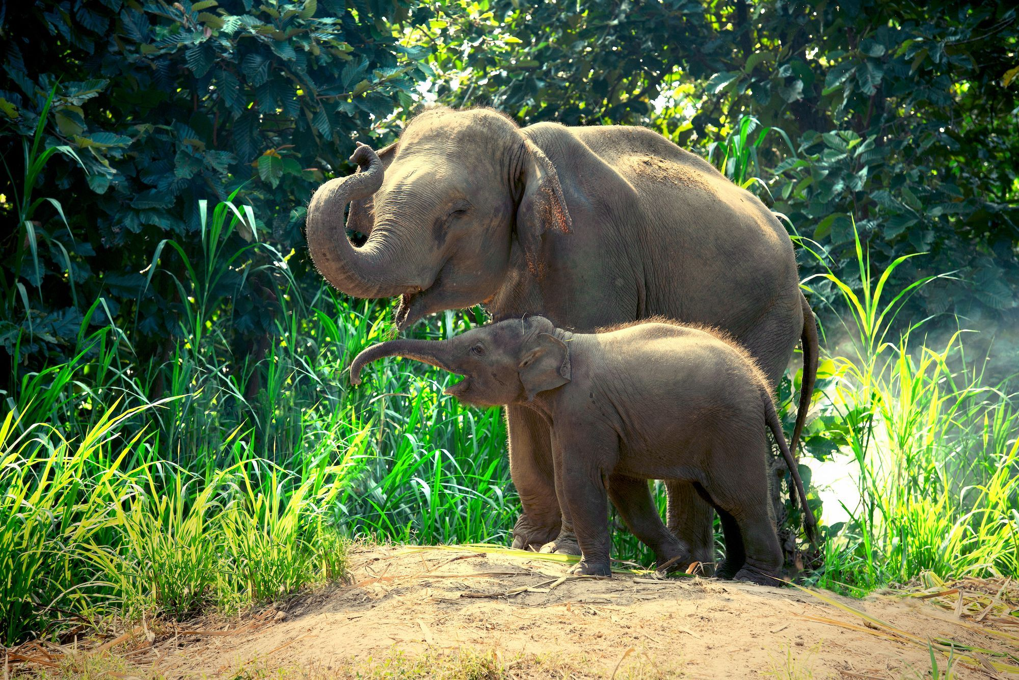 Image result for wildlife