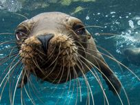 Picture of sea lion