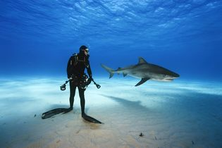 Sharks on Assignment