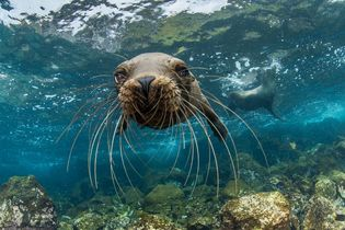 Galapagos: A VR Exploration