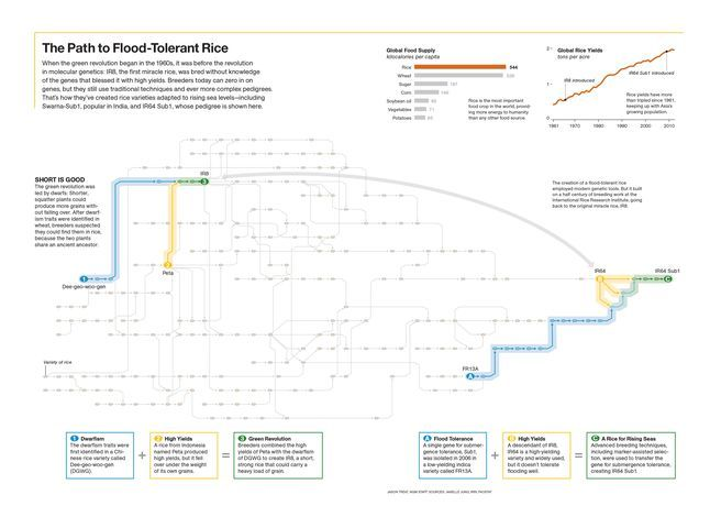 The Path to Flood-Tolerant Rice