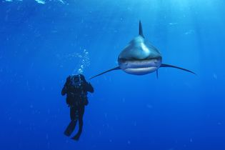 Master Class: Brian Skerry