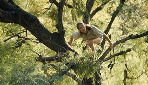 Picture of Jane Goodall in tree