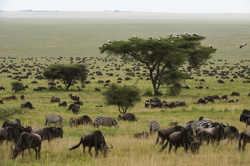 African Leaders Could Hold the Key to Protecting the World's Wildlife and Wild Places.