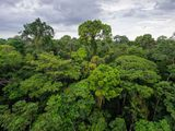 Protecting Biodiversity in the Amazon Rain Forest