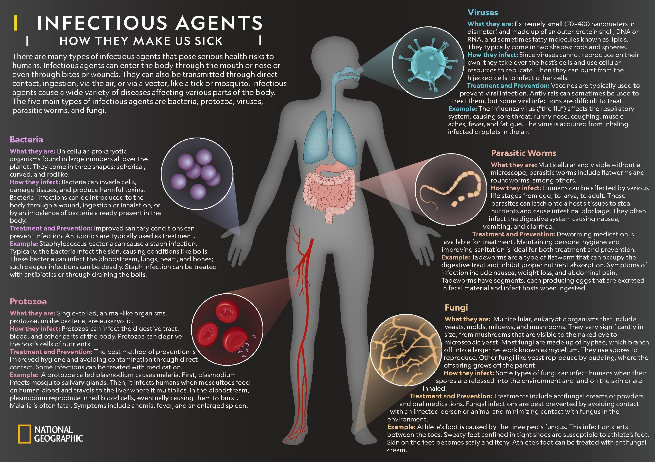 Infectious Agents | National Geographic Society