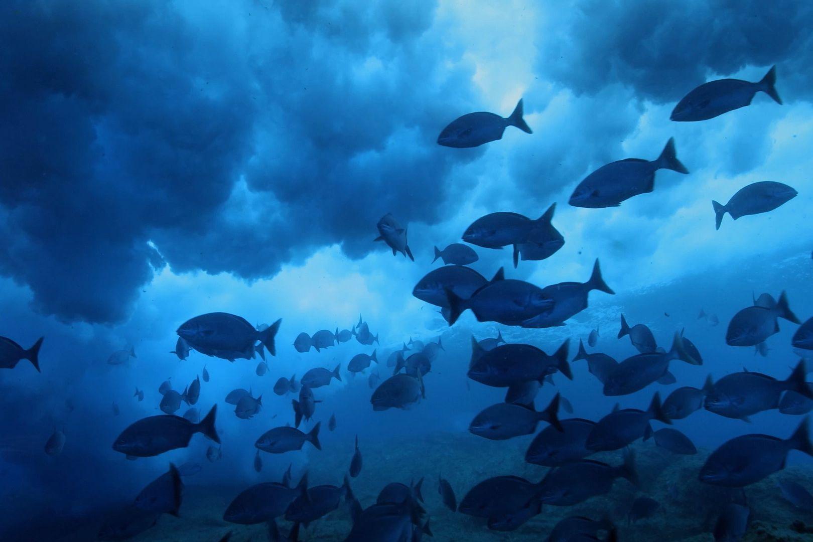 pristine seas national geographic society