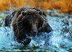 Grizzly Bears and other wildlife along the Fishing Branch River in the Yukon.