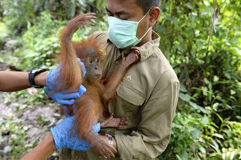 Picture of Panut Hadisiswoyo