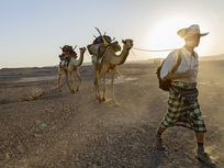 Journalist Paul Salopek leads a pair of camels across Ethiopia's Afar desert.