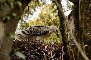 National Geographic Nights: Bird Nerds