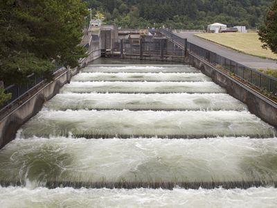Dams on rivers prevent fish from migrating upstream to lay their eggs. Some dams hope to mitigate this by using fish ladders or other infrastructure.