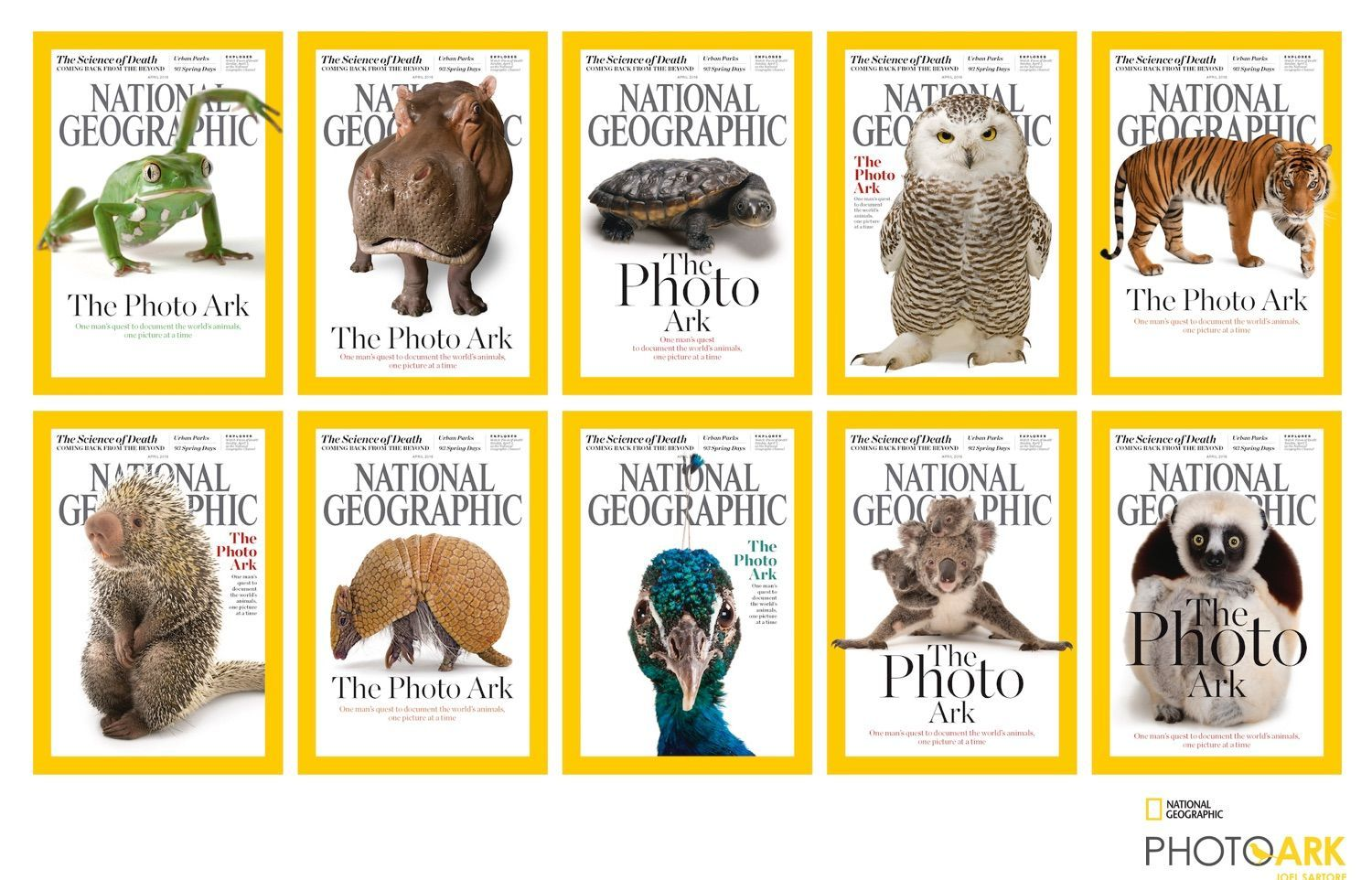 Endangered Species and Their Biomes | National Geographic Society