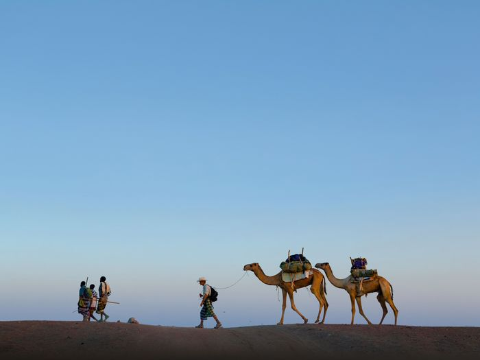 Picture of Journalist Paul Salopek, with guides, leads a pair of camels across Ethiopia's Afar desert.