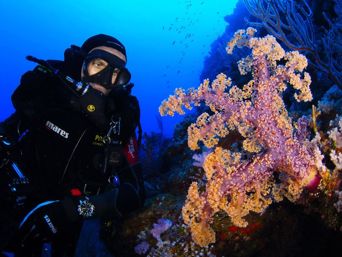 Picture of Enric Sala and soft coral in New Caledonia
