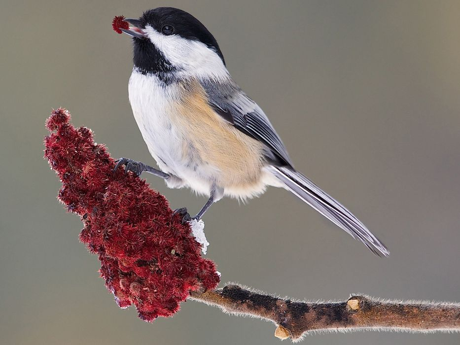 Year of the Bird - National Geographic Society