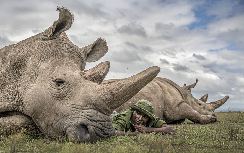 Man laying down next to rhino