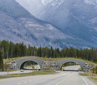 Wildlife overpasses, tunnels, or bridges help animals cross the road safely. This protects them and the people in the vehicles.