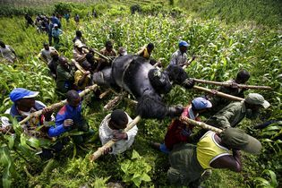 Through the Lens: Saving Africa's Wildlife