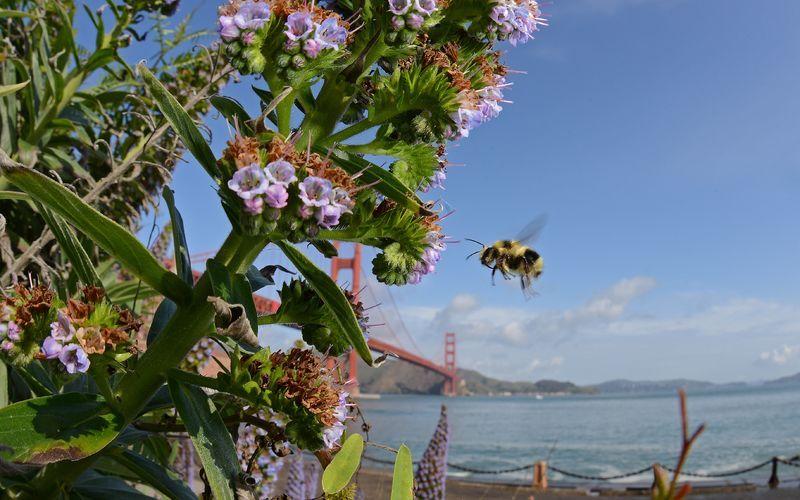 maya the bee movie 2014 watch online
