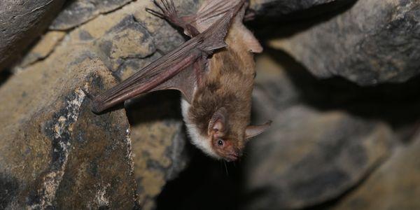 Image of bat in cave