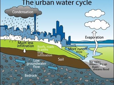 The Urban Water Cycle. Auckland Council.