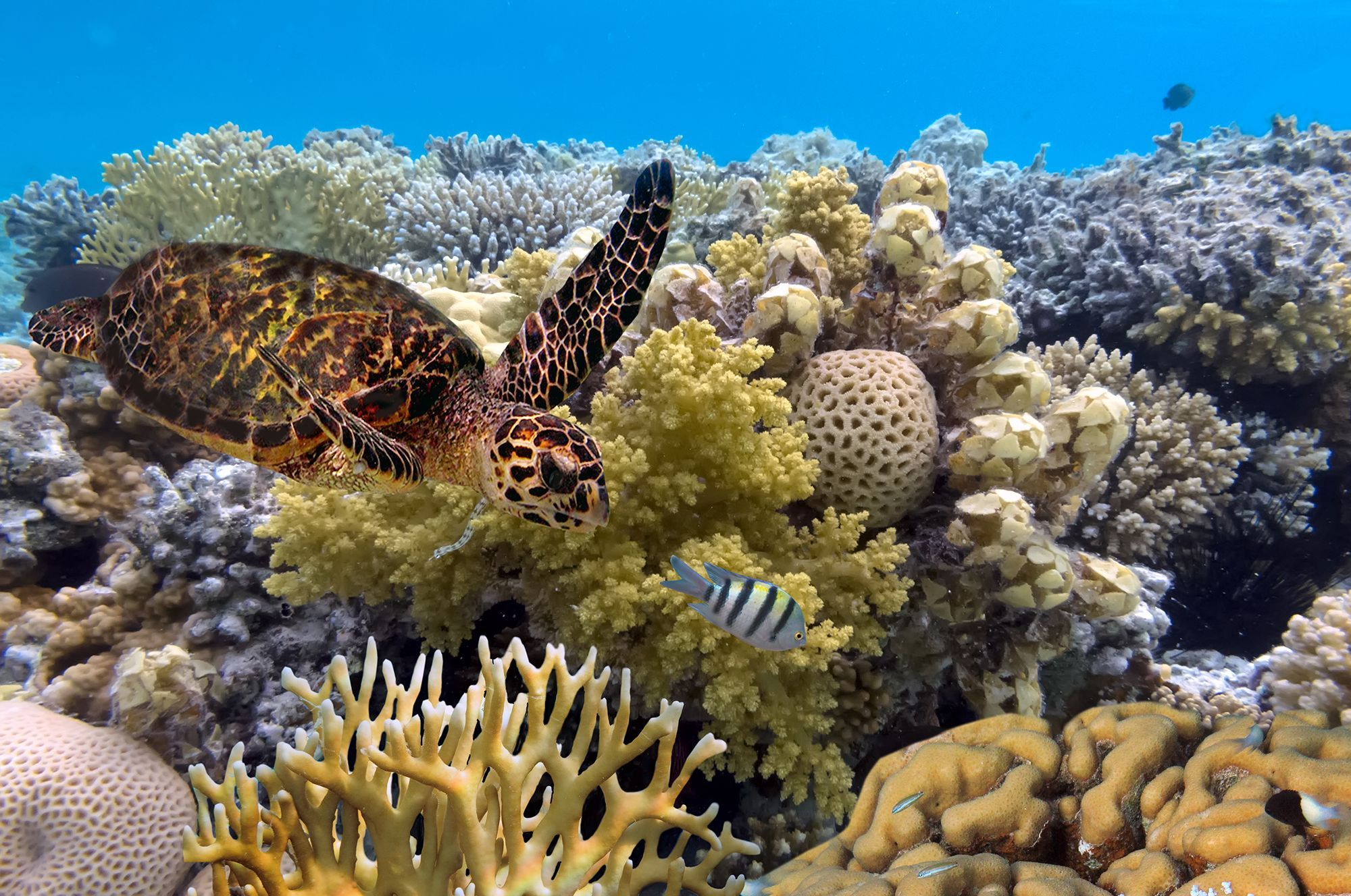 Great Barrier Reef | National Geographic Society