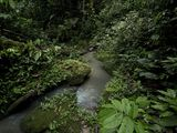 Ask an Amazon Expert: Why We Can't Afford To Lose the Rainforest