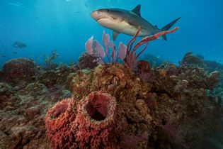 Mission Critical: Sharks Under Attack