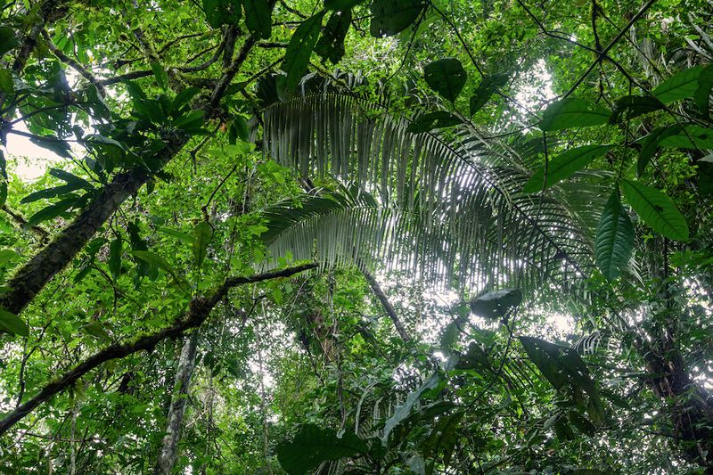 the deforestation of the amazon case study answers Igcse and gcse geography case studies  finished with a case study question worth seven  talk about the amazon rainforest for tropical rainforests and the sahara.