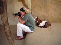 Photographer Jodi Cobb frames a shot as a goat looks on.