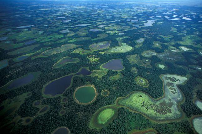Biodiversity Pantanal 2691014