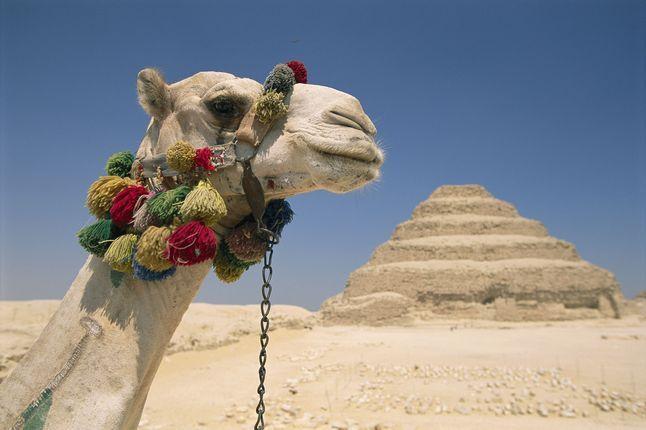 Ancient Egypt Camel 92863