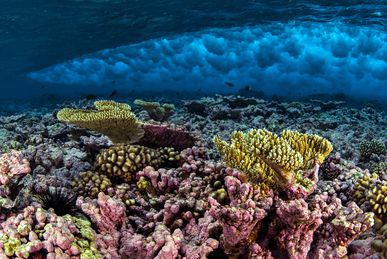 coral reef under waves