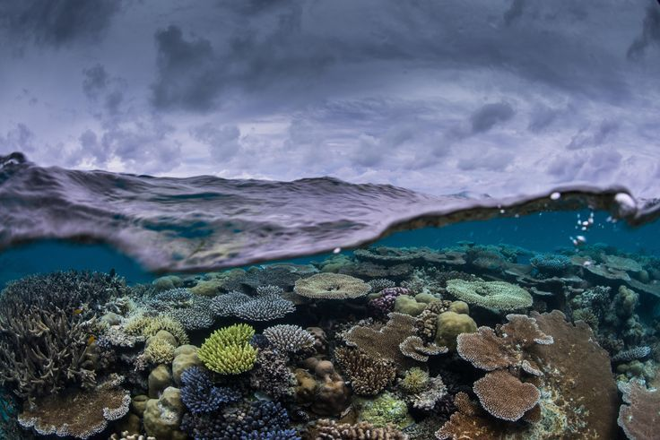 Marine Protected Areas Are Important. But Are They Working?