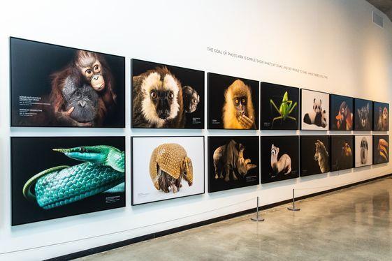 Photo ark exhibit