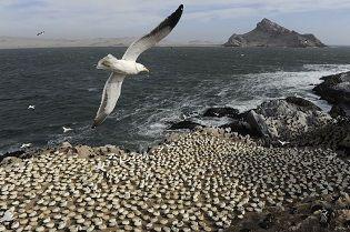 Saving Sea Birds