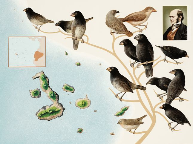 Darwin's Finches Diagram