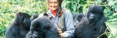 Picture of Dian Fossey with gorillas