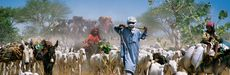 Picture of farmers in Chad