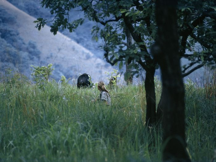 A frightened chimpanzee runs away from Jane Goodall in Gombe Stream National Park, Tanzania.