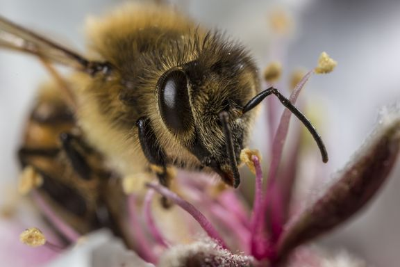 a worker bee collects honey from a brightly colored flower