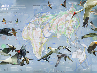 Map of bird migrations across the Eastern Hemisphere