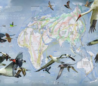 Map of bird migrations across the Eastern Hemisphere