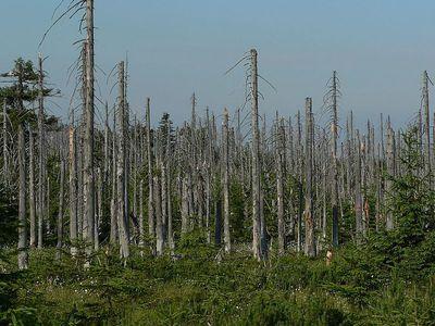 Acid rain woods