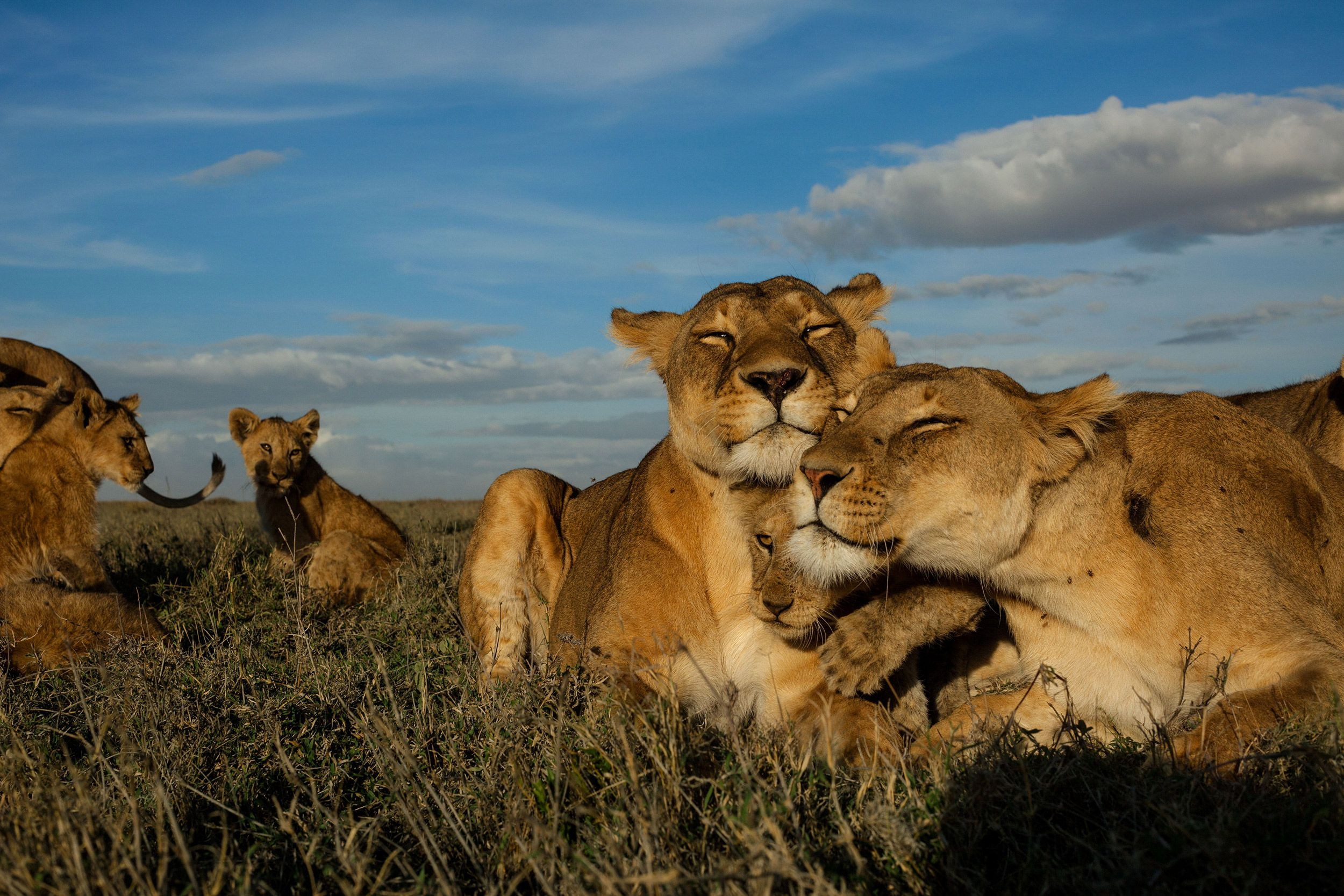 Big Cats Initiative | National Geographic Society